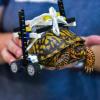 """Tartaruga in riabilitazione grazie ad una carrozzina """"LEGO"""""""