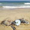 Due tartarughe trovate in fin di vita a causa di un rocchetto di lenza