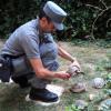 Avevano in casa tartarughe senza documenti: due denunce