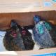 A.A.A. cercasi piloti ed operatori aerei per… le tartarughe