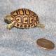 "Nata una ""tartaruga leopardo"" al Maritime Aquarium (USA)"