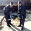 Due grosse tartarughe marine salvate dalla Guardia Costiera