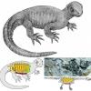 Identificato un antico cancro alle ossa in un fossile di tartaruga