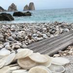 I filtri di plastica del Sele uccidono una tartaruga marina