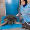 La tartaruga Afrodite ha chiuso gli occhi per sempre!