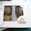 Berlino: tartarughe egiziane nascoste in una scatola di cioccolatini