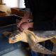 """""""Un mare di inkiostro per le tartarughe"""" per la Fondazione Cetacea"""