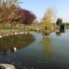 """Cominciato il """"trasloco"""" delle tartarughe del Parco Amarcord"""