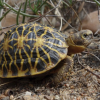 "Estesa la riserva per la salvaguardia della rara ""tartaruga geometrica"""