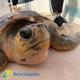 Torna in mare la tartaruga salvata da una bimba di 8 anni