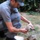 Sicilia: sequestro di uccelli e tartarughe bracconati in natura