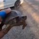 Sparano ad una tartaruga e pubblicano il video su Snapchat