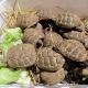 Ventidue baby tartarughe terrestri abbandonate in una cassetta