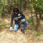 Gli trovano droga e tartarughe in casa: arrestato un romano
