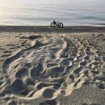 Primo nido del 2019: mamma tartaruga ha scelto la Calabria
