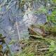 "Rilasciate sedici rare tartarughe ""Emys orbicularis ingauna"""