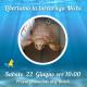 Torna in mare Michi, la tartaruga recuperata a gennaio a Fano