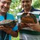 Scoperta in India una nuova specie di tartaruga terrestre