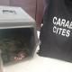 Quattro tartarughe abbandonate in uno scatolo a Sarzana