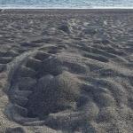 Trovato nido di tartaruga marina in Cilento: ma era solo una prova