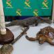 Quattro indagati per vendita di oggetti realizzati con animali protetti