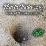 """Undicesimo aggiornamento deposizioni 2019 di """"Caretta caretta"""""""