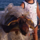 Sardegna: deceduta la tartaruga marina salvata dal bimbo