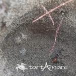 Rinvenuto nido di tartaruga marina a Castiglione della Pescaia (GR)