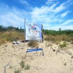Tartaruga nidifica su una spiaggia incontaminata a Grosseto