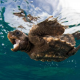 Le buone norme per salvare le schiuse delle tartarughe marine