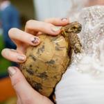 Tartaruga centenaria partecipa al matrimonio della proprietaria