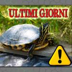 Ultimi giorni per denunciare il possesso della propria tartaruga acquatica