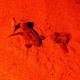 Anche quest'anno le tartarughe marine nascono ad Eboli (SA)