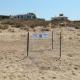 Nono nido di tartaruga marina in provincia di Agrigento