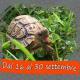 La tua tartaruga nel Calendario e nell'Agenda 2020: scopri come!