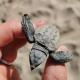 Evento eccezionale: nascita di tartarughe marine in Molise