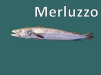 Merluzzo