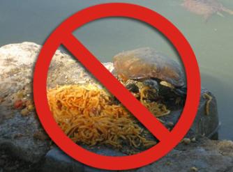 Tartaruga acquatica NO pasta