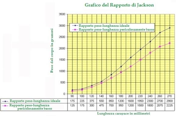Grafico Jackson
