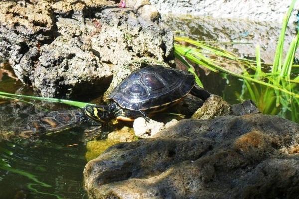 L 39 intervista a la ragazza delle tartarughe tartapedia for Tartarughe nel laghetto
