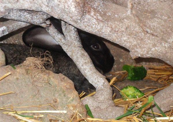 Debora coniglio