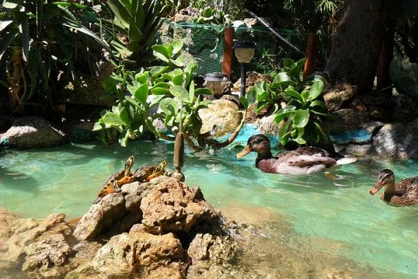 L 39 intervista a la ragazza delle tartarughe tartapedia for Animali laghetto