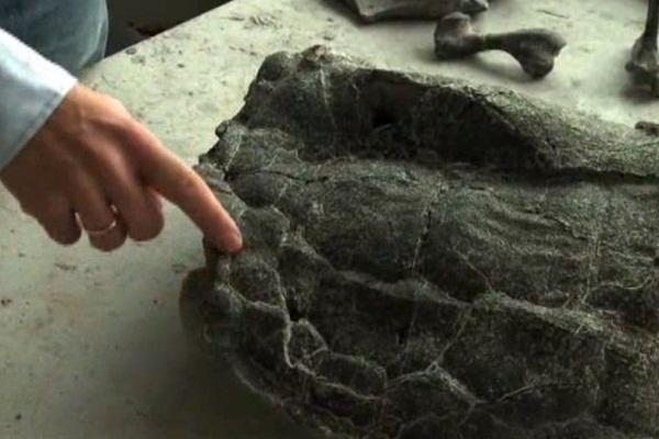 tartaruga polonia fossile