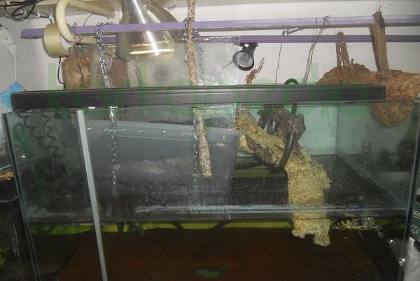 Costruire la zona emersa utilizzando vasca ikea e for Vasca per tartarughe grandi
