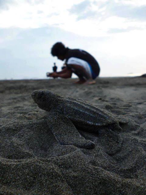 Morto per difendere le tartarughe tartapedia for Tartarughe in amore