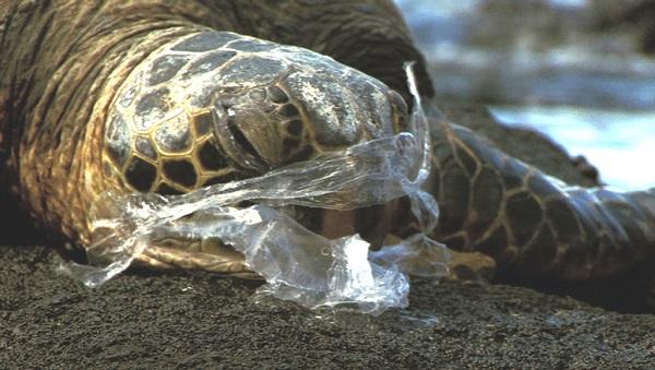 La strage della plastica centinaia di tartarughe e for Vasche di plastica per tartarughe