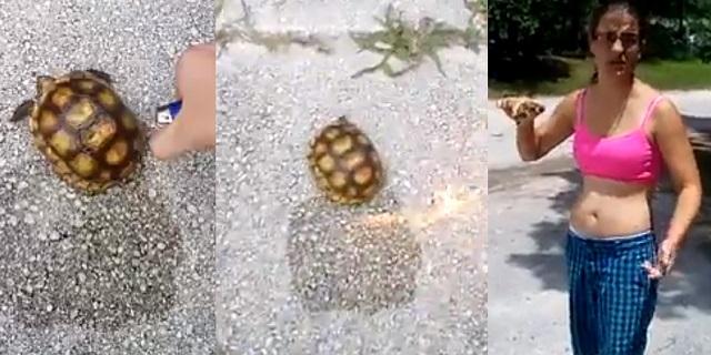 florida tartaruga in fiamme