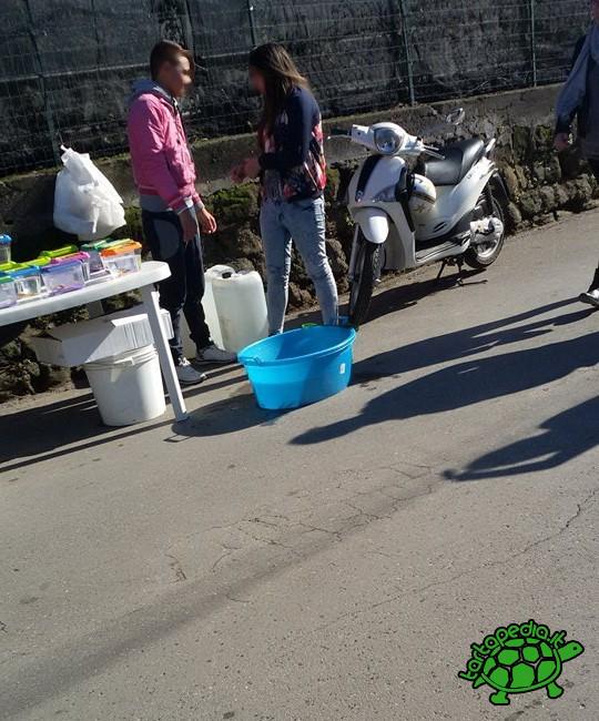 Due novembre la giornata dei morti anche per le for Vaschetta tartarughe prezzo