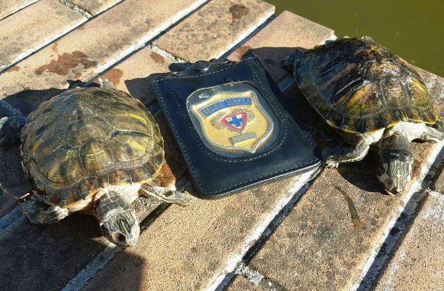 Due tartarughe morte nel laghetto del caos tr tartapedia for Tartarughe nel laghetto