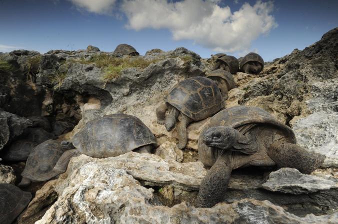 Scoperte tartarughe cavernicole sull 39 atollo di aldabra for Temperatura tartarughe